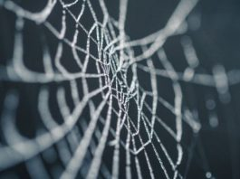 Anti scraping web techniques